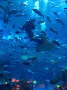 Feeding fish in the Dubai Mall Aquarium
