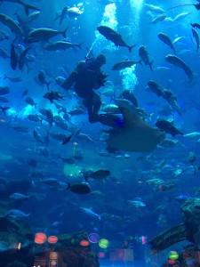 Feeding fish in the Dubai Mall Aquarium